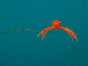tuna crab La Jolla cove Ecological Reserve