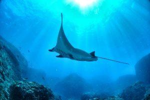 Palau Adventure Tour FAQ