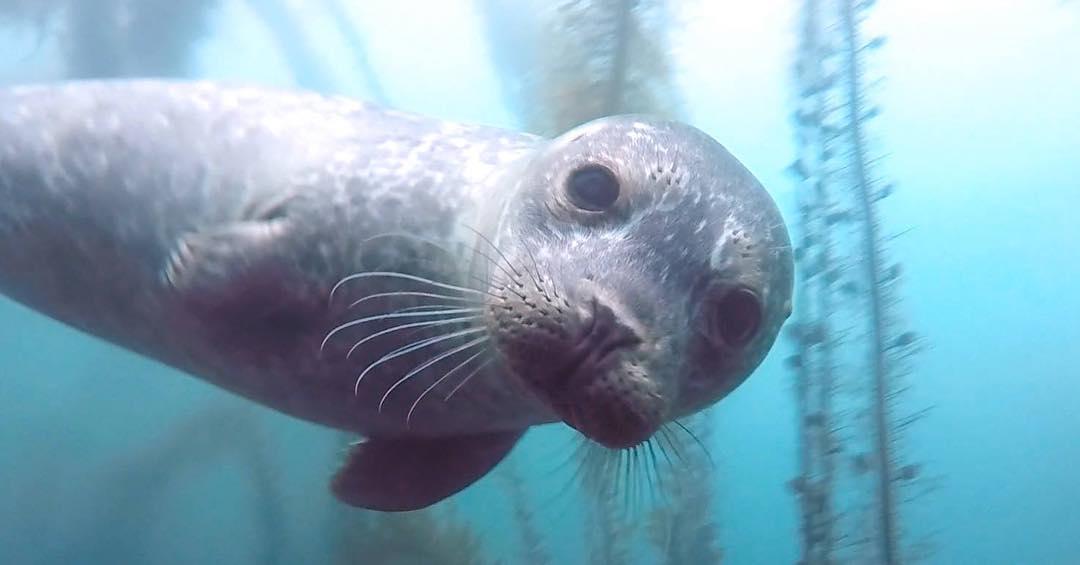 Sea lion special. 4 divers